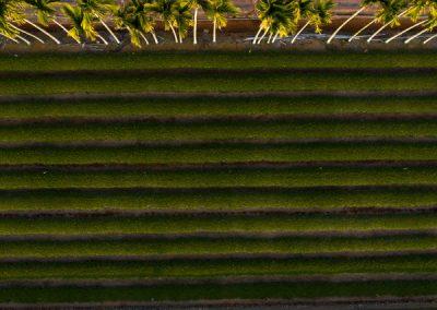 čajové plantáže na ostrově Taiwan z dronu