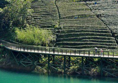 Cyklostezka na čajové plantáži ve městě Pinglin na Taiwanu