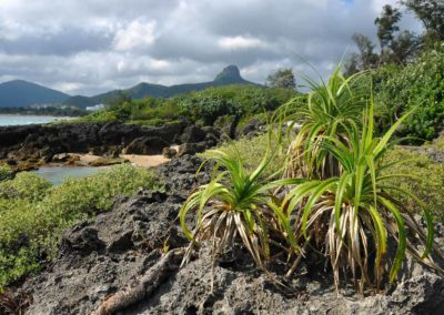 Příroda národního parku Kenting na jihu ostrova Ilha Formosa