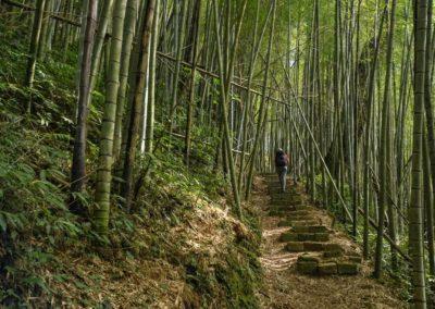 Cesta bambusovým lesem na ostrově Taiwan