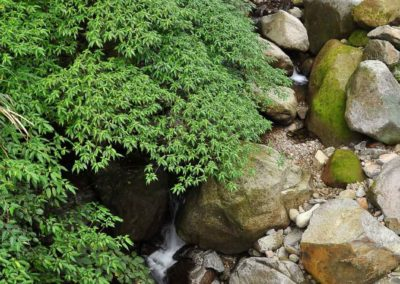 Příroda národního parku Yangmingshan na Taiwanu