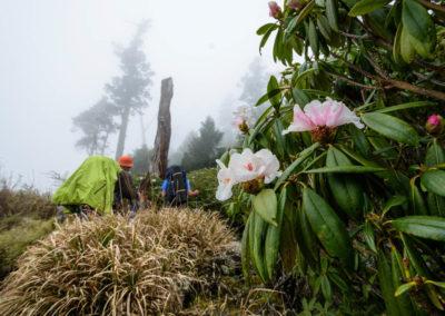 Rododendrony na ostrově Taiwan v národním parku Sheipa