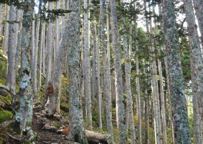Stezka pralesem při výstupu na horu Xueshan
