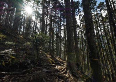 Prales na horách ostrova Taiwan
