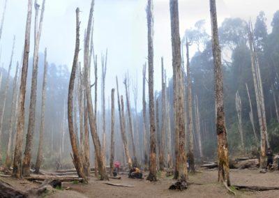 Unikátní prales Shuiyang v okrese Nantou na Taiwanu
