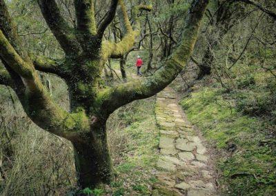 Pěší turistika v NP Yangmingshan