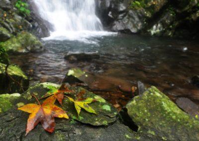 Horská říčka a vodopád na Taiwanu