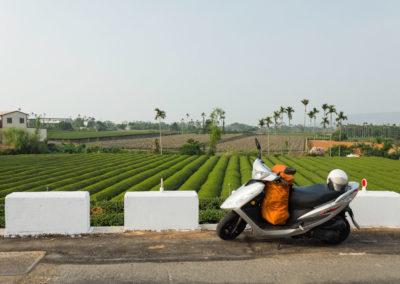 Skútr a čajové plantáže v okrese Nantou