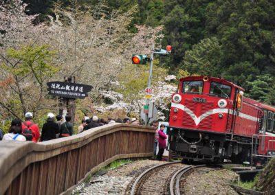 Alishanská železnice v období kvetoucích sakur