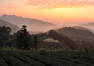 Čajové plantáže, kde se pěstuje Alishan oolong, za západu slunce