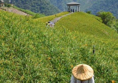 Sběrači horských lilií poblíž města Hualien na ostrově Taiwan