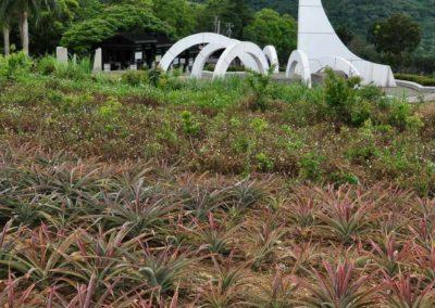 Památník a ananasové pole na obratníku Raka na Taiwanu
