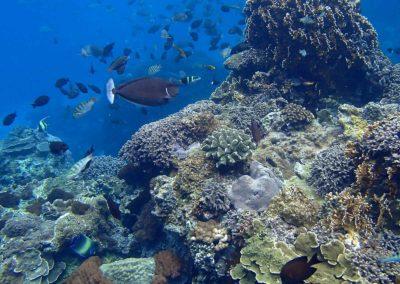 Podmořský život na ostrově Lanyu poblíž Taiwanu