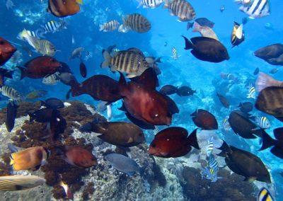 Podmořský svět na ostrově Ludao poblíž Taiwanu
