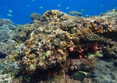 Bohatý podmořský život ostrova Taiwan