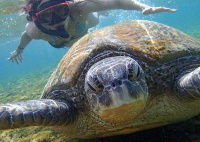 Šnorchlování se želvami na Tchaj-wanu