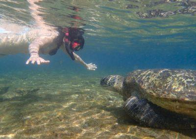 Šnorchlování s želvami na ostrově Xiao Liuqiu