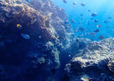 Bohatý podmořský svět na ostrově Green Island poblíž Taiwanu