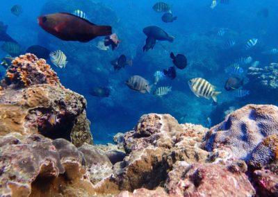 Podmořský svět na ostrově Green Island poblíž Taiwanu